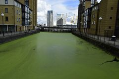 12 septembre de Londres Canary Wharf 2017 L'eau verte entre les bâtiments Photos stock