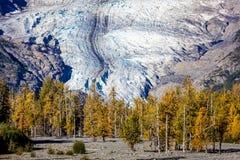 2 septembre 2016 - glacier et couleur d'or d'automne, Alaska Photographie stock