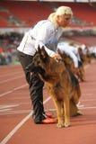 7 septembre 2014 la plus grande exposition canine de berger allemand de Nurnberg en allemand Image stock