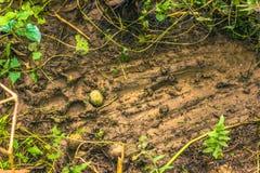 3 septembre 2014 - marques de Tiger Territorial dans le ressortissant de Chitwan Images libres de droits