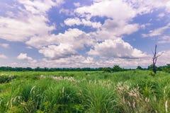 3 septembre 2014 - panorama de parc national de Chitwan, Népal Image libre de droits
