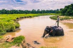 9 septembre 2014 - parc national de Chitwan de bain d'éléphant, Népal Photographie stock libre de droits