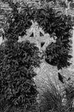 Sepultura coberto de vegetação imagem de stock
