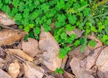 Seqúese CONTRA verde Fotografía de archivo libre de regalías