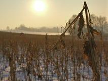 Seqúese en el invierno Foto de archivo libre de regalías