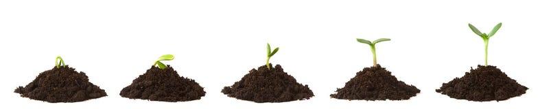 Seqüência da planta em pilhas da sujeira Foto de Stock Royalty Free