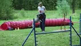 Sequência com o movimento lento que compete na competição, raça animal da agilidade com o cão que corre e que faz o slalom Sequên video estoque