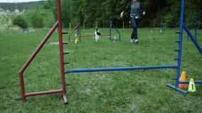 Sequência com o movimento lento que compete na competição, raça animal da agilidade com o cão que corre e que faz o slalom Sequên vídeos de arquivo