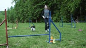 Sequência com o movimento lento que compete na competição, raça animal da agilidade com o cão que corre e que faz o slalom Sequên filme