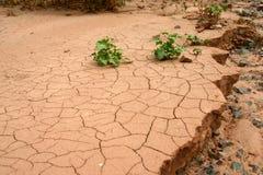 Sequía. Fotografía de archivo libre de regalías