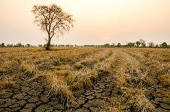 Sequía de tierra Imagenes de archivo