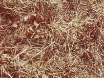 Sequía del ambiente Hierba seca en gama del prado a la sequedad extrema fotos de archivo