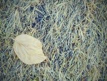 Sequía del ambiente Hierba seca en gama del prado a la sequedad extrema fotografía de archivo libre de regalías