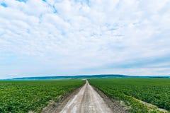 sequía Soja del campo cosecha Imagen de archivo