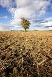 Sequía, verano caliente Fotos de archivo