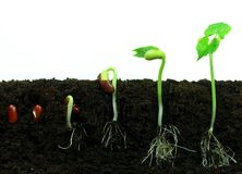 Sequance di germinazione fotografia stock libera da diritti