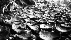 sequías Foto de archivo libre de regalías