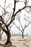 Seque a árvore Foto de Stock Royalty Free