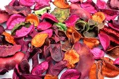 Seque as folhas Fotos de Stock