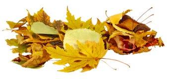Seque as folhas Foto de Stock
