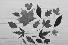 Seque as folhas colocadas no centro Conceito da arte do outono Coleção das folhas de outono no fundo de madeira Fotografia de Stock Royalty Free