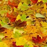 Seque as folhas como um fundo Fotografia de Stock