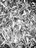 Seque as folhas em preto e branco Fotografia de Stock