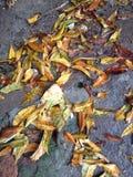 Seque as folhas molhadas pela chuva Imagem de Stock Royalty Free