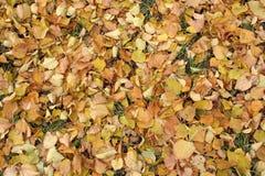 Seque as folhas na terra imagens de stock