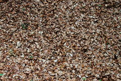 Seque as folhas na terra Foto de Stock