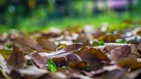 Seque as folhas na terra Imagens de Stock Royalty Free