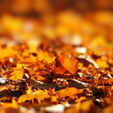 Seque as folhas no outono Foto de Stock