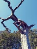 Seque a aventura de madeira hirto de medo da natureza do céu azul de tronco de árvore foto de stock