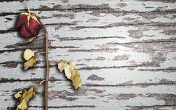 Seque color de rosa Fotos de archivo libres de regalías