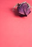 Seque cor-de-rosa Imagens de Stock