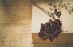 Seque cor-de-rosa Fotos de Stock Royalty Free