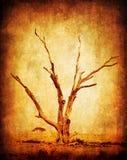 Seque el árbol del africano del grunge imagen de archivo