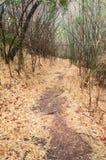 Seque el bosque de la caída foto de archivo