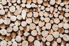 Seque el fondo de madera del tocón del corte y texturicelo Foto de archivo libre de regalías