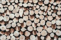 Seque el fondo de madera del tocón del corte y texturicelo Imagen de archivo libre de regalías