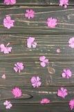 Seque flores cor-de-rosa do gerânio em um fundo verde Fotografia de Stock Royalty Free