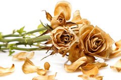 Seque la flor color de rosa Imagenes de archivo