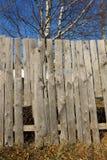 Seque la hierba marchitada en la cerca de madera Imágenes de archivo libres de regalías