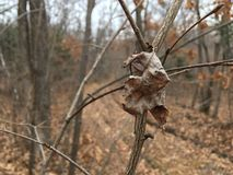 Seque la hoja pálida, rama desnuda, primer Naturaleza del otoño Fotografía de archivo