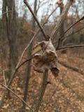 Seque la hoja pálida, rama desnuda, primer Naturaleza del otoño Fotografía de archivo libre de regalías