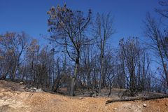 Seque la ladera quemada de California carbonizada y devastada por un incendio fuera de control del bosque fotos de archivo