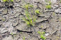 Seque la suciedad agrietada molida con la supervivencia de la planta verde Foto de archivo libre de regalías