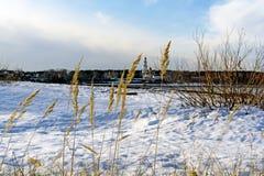 Seque las espiguillas de oro de la hierba del ` s del año pasado Imagenes de archivo