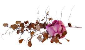 Seque las flores delicadas y las hojas color de rosa aisladas en el blanco, digital Imagenes de archivo