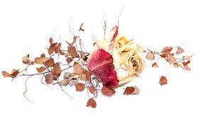 Seque las flores delicadas y las hojas color de rosa aisladas en blanco Foto de archivo libre de regalías